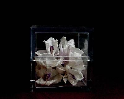 Photograph - White Orchids by Margie Avellino