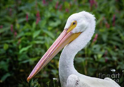 Thomas Kinkade - White Pelican by Robert Frederick
