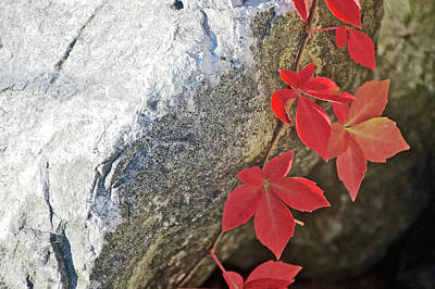 Photograph - White Rocks And Red Leaves By Grand Haven Channel, Michigan by Ruth Hager