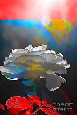 Photograph - White Rose by Elaine Hunter
