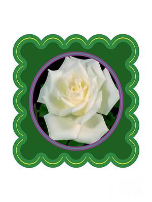 Photograph - White Rose Flower Floral Posters Photography And Graphic Fusion Art Navinjoshi Fineartamerica Pixels by Navin Joshi