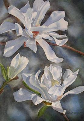 Magnolia Painting - White Star Magnolia Blossoms by Sharon Freeman