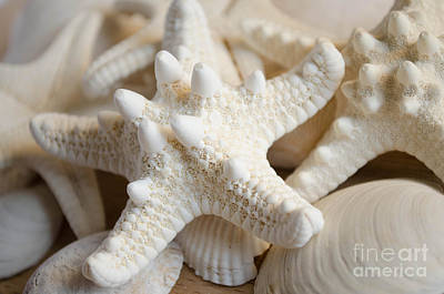 Photograph - White Starfish by Andrea Anderegg