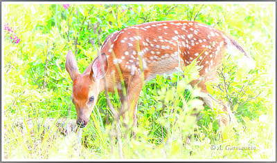 Photograph - White-tailed Deer Fawn Foraging In Meadow by A Gurmankin