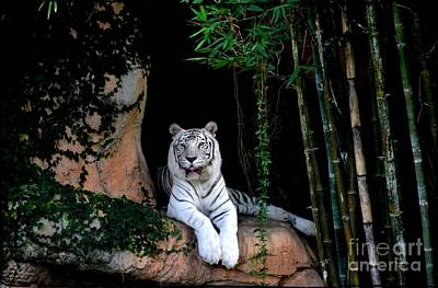 Photograph - White Tiger by Janice Spivey