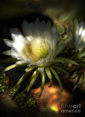 White Torch Cactus Flowers  Art Print by Saija  Lehtonen