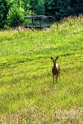 Art Print featuring the photograph Whitetail Deer And Hay Rake by Thomas R Fletcher