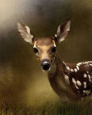 Photograph - Whitetail Fawn by TnBackroadsPhotos