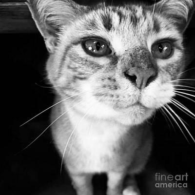 Photograph - Who Me? by Rabiah Seminole