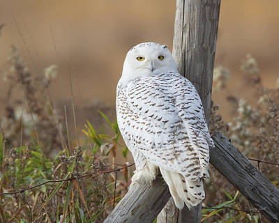 Photograph - Whoo Are You by Gerry Sibell