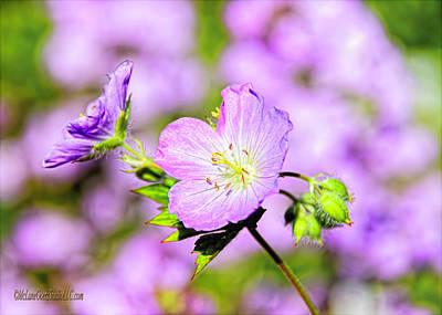 Fauna Photograph - Wild Apple Blossoms  by LeeAnn McLaneGoetz McLaneGoetzStudioLLCcom