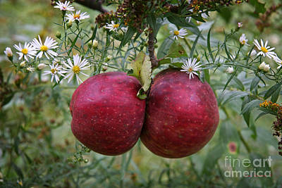 Photograph - Wild Apples by John Stephens