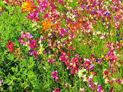 Photograph - Wild Colors by Marilyn Diaz