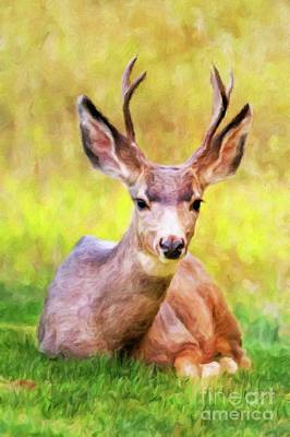 Mammals Royalty-Free and Rights-Managed Images - Wild Deer by Sarah Kirk