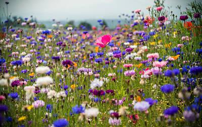 Port Washington Photograph - Wild Flowers by Kristopher Schoenleber