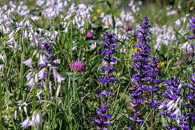 Photograph - Wild Flowers by Patricia Hofmeester