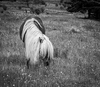 Photograph - Wild Horse At Grayson Highlands - Bw by Joye Ardyn Durham