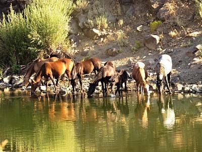 Photograph - Wild Horses by Joshua Bales