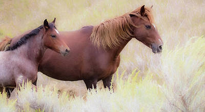 Photograph - Wild Horses  by Kelly Marquardt