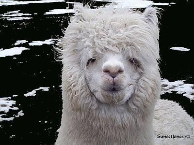 Alpaca Digital Art - Wild Life by Robert Orinski