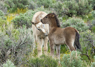 Photograph - Wild Mustang Foals by Waterdancer