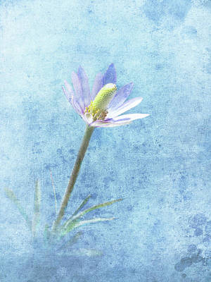 Photograph - Wild Onion Bloom by David and Carol Kelly