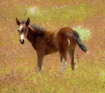 Photograph - Wild Paint Foal In The Springtime by Waterdancer