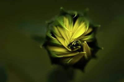 Photograph - Wild Sunflower by Jay Stockhaus