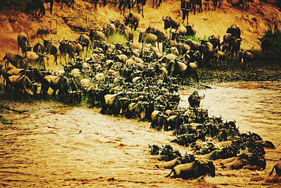 Photograph - Wildebeest At River by Pixabay