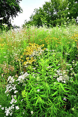 Photograph - Wildflower Garden At Silver Creek Conservation Area by Ray Mathis