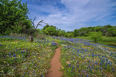 Photograph - Wildflower Path On The Willow City Loop by Lynn Bauer