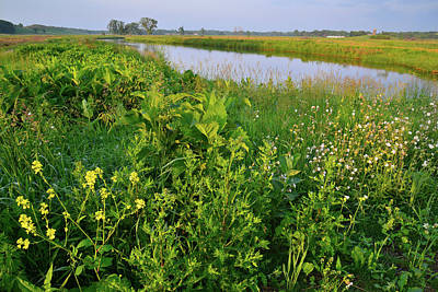 Target Threshold Nature - Wildflowers Along the Nippersink Creek in Glacial Park by Ray Mathis