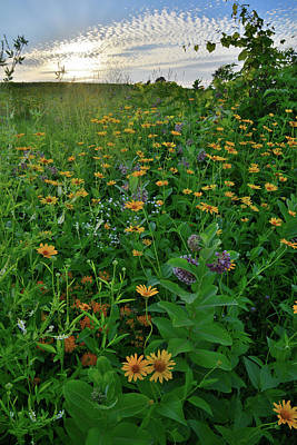 Photograph - Wildflowers Bloom In Glacial Park by Ray Mathis