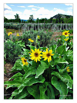 Photograph - Wildflowers In Yellowstone by Joan  Minchak