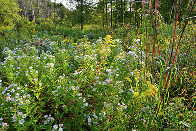 Photograph - Wildflowers Of Hennen Conservation Area by Ray Mathis