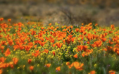 Photograph - Wildflowers by Saija Lehtonen