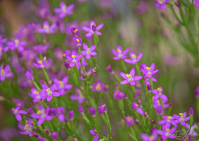 Photograph - Wildflowers by Steph Gabler