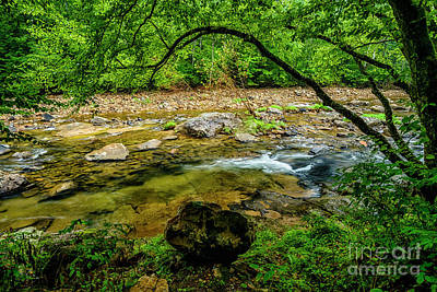 Photograph - Williams River Summer Flow by Thomas R Fletcher