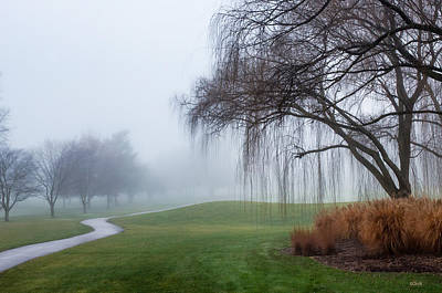 Photograph - Willows In Fog by Dana Sohr