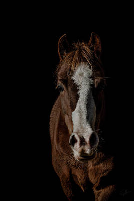 Pony Photograph - Window To The Soul by Paul Neville