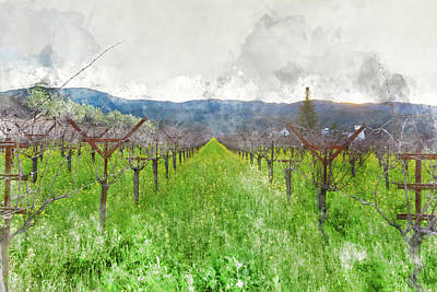 Vineyard Photograph - Wine Vineyard In Spring by Brandon Bourdages