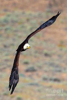 Photograph - Wingspan by Mike Dawson