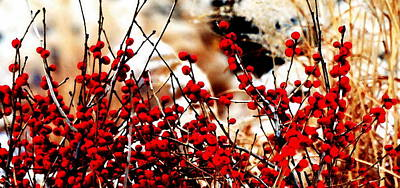 Photograph -  Winter Berries by Jacqueline M Lewis