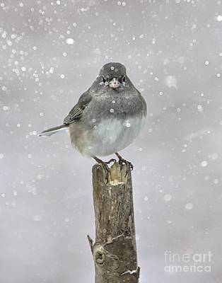 Photograph - Winter Bird by Debbie Green