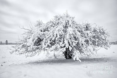 Photograph - Winter Blanket by Mike Dawson