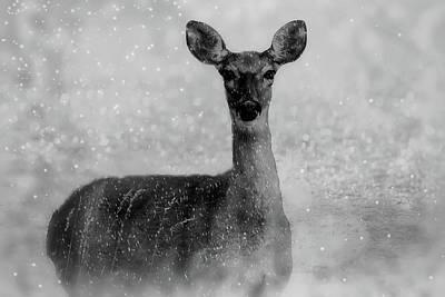 Photograph - Winter Deer by Pixabay