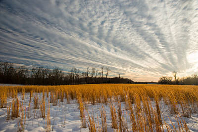 Photograph - Winter Field - Maryland by Dana Sohr