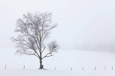Photograph - Winter Fog by Alan L Graham