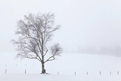 Photograph - Winter Fog by Alan L Graham