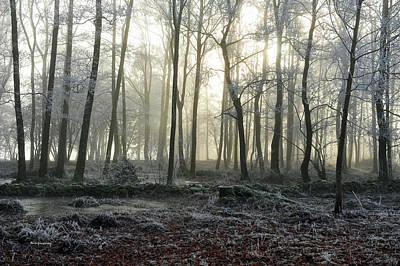 Photograph - Winter Fog by Randi Grace Nilsberg